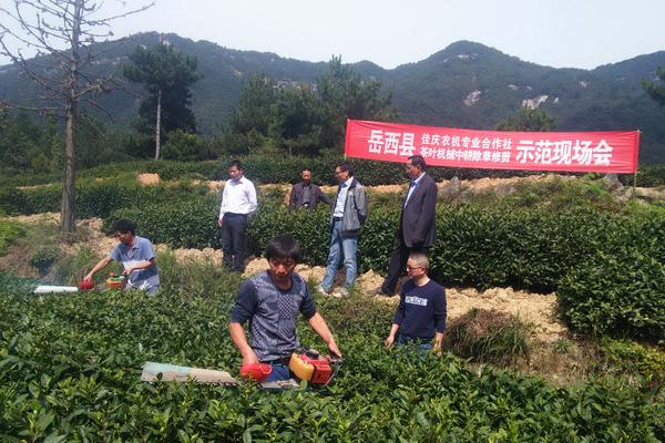 安徽岳西县召开茶叶机械中耕除草修剪示范现场会